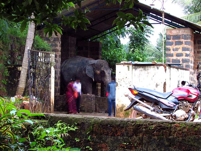 Shree Durgaparameshwari Temple (Kateel Temple), Mangalore