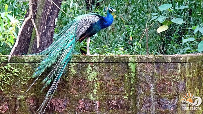 Pilikula Bioogical Park 1 - Pilikula Biological Park