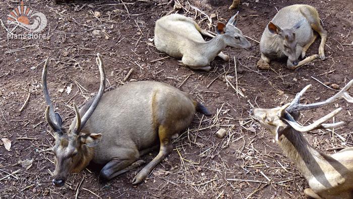 Pilikula Bioogical Park, Mangalore