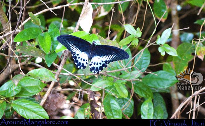 Sammilan 1 - Sammilan Shetty's Butterfly Park, Belvai