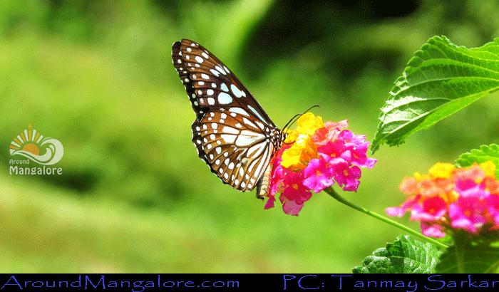 Sammilan 10 - Sammilan Shetty's Butterfly Park, Belvai