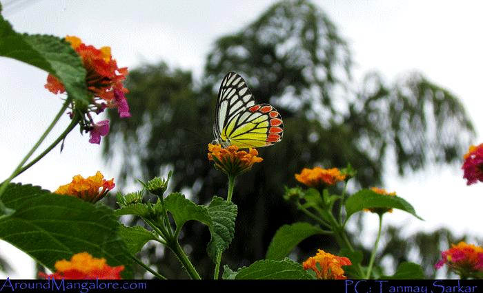 Sammilan 11 - Sammilan Shetty's Butterfly Park, Belvai