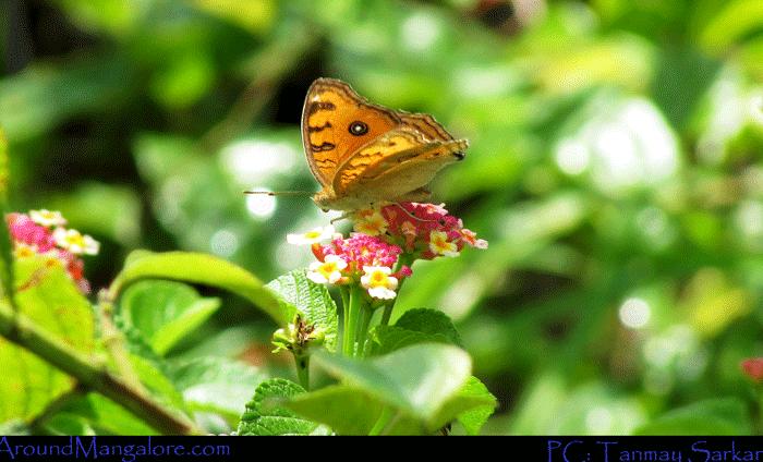 Sammilan Shetty's Butterfly Park, Belvai