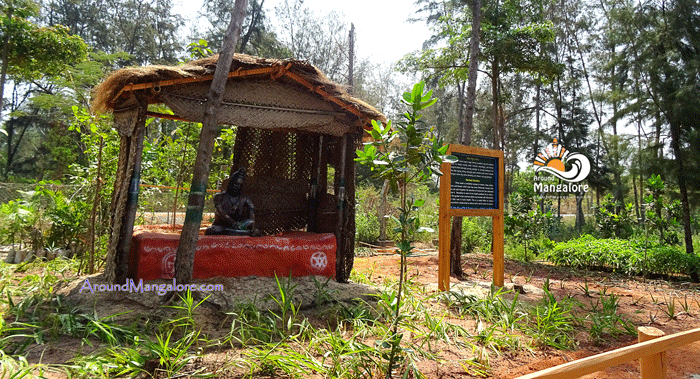 Herbal Plants - Tannirbhavi Tree Park, Near Tannirbhavi Beach, Mangalore - AroundMangalore.com