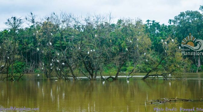 Mandagadde Bird Sanctuary – Shimoga