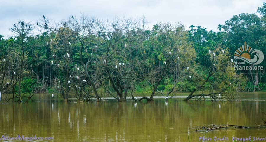 Mandagadde Bird Sanctuary - Mandagadde village, Shimoga, Karnataka