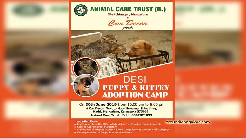 Desi Puppy & Kitten Adoption Camp - 30 Jun 2019 - Car Decor, Mangalore