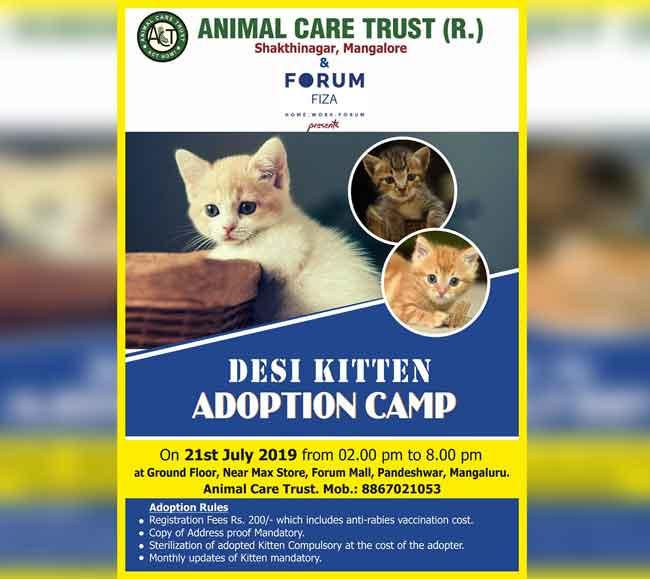Desi Kitten Adoption Camp - 21 Jul 2019 - Animal Care Trust - Forum Fiza Mall, Pandeshwar, Mangalore