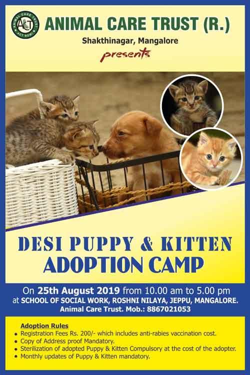Desi Puppy & Kitten Adoption Camp - 25 Aug 2019 - Roshini Nilaya, Valencia, Mangalore