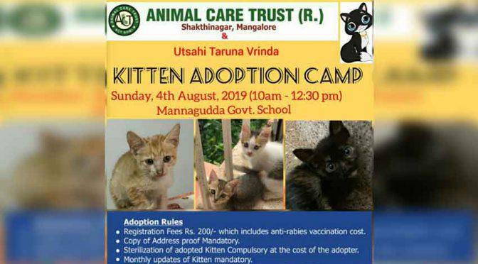 Kitten Adoption Camp - 4 Aug 2019 - Mannagudda Govt School, Mangalore