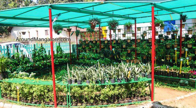 Our Balcony Garden - Kadri Kambla Road, Kadri, Mangalore