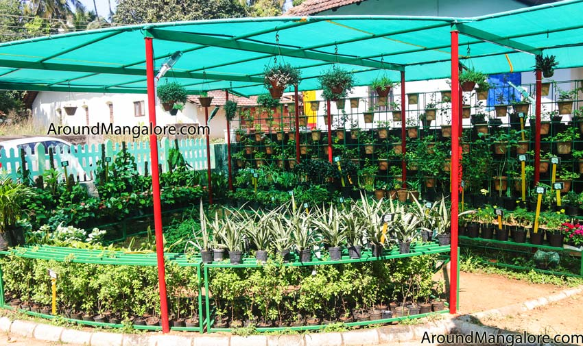 Our Balcony Garden – Kadri Kambla Road