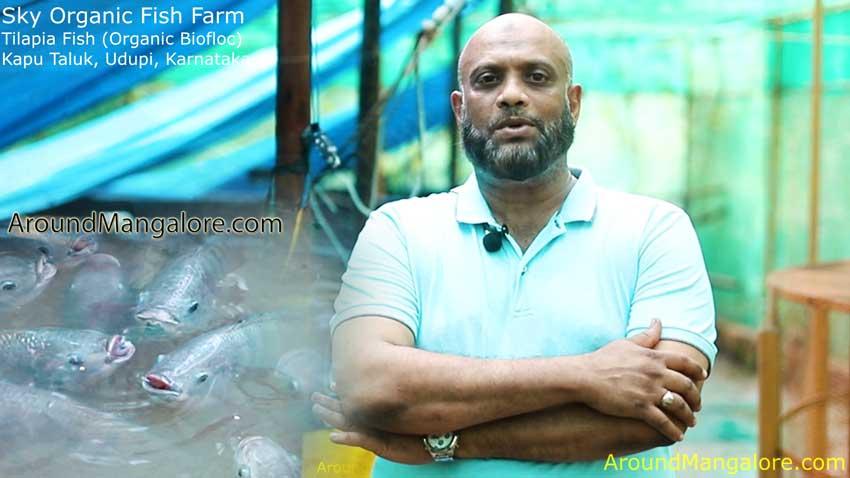 Buy Fresh Tilapia Fish (Organic Biofloc) at Sky Organic Fish Farm  – Kapu Taluk, Udupi
